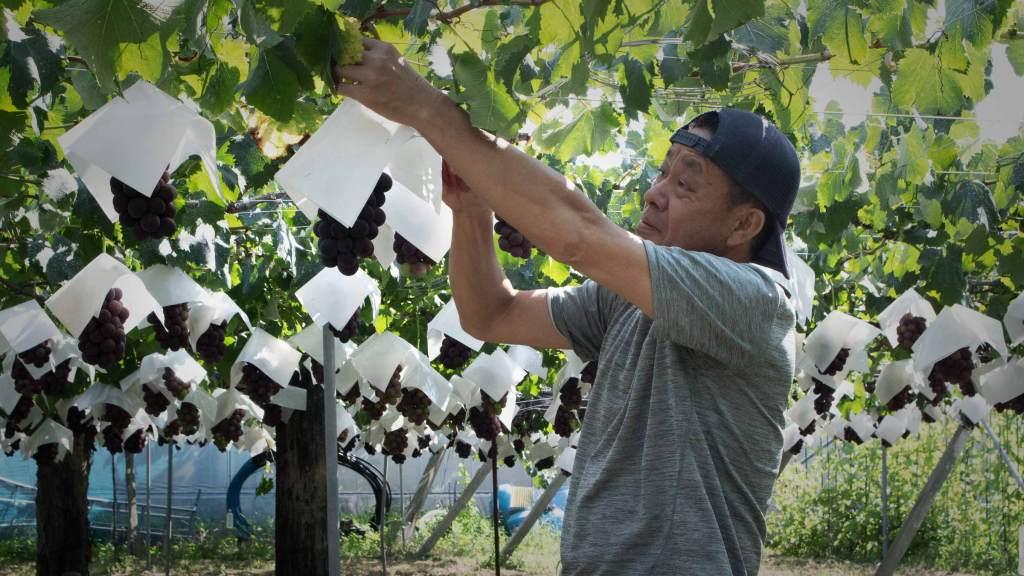 「望月果樹園」「三方よし」の堅実経営で利益を拡大するぶどう農家